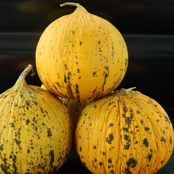 peponia thrakis