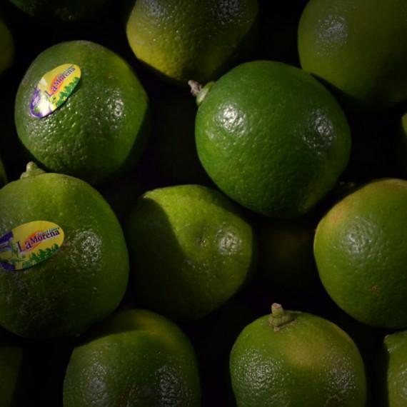 Λεμόνια-Lime-Βραζιλίας