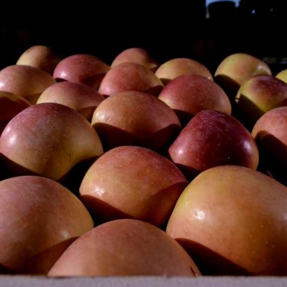 Μήλα Φούτζι Βεροίας
